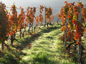 Vinho Verde Wine Lover Monverde
